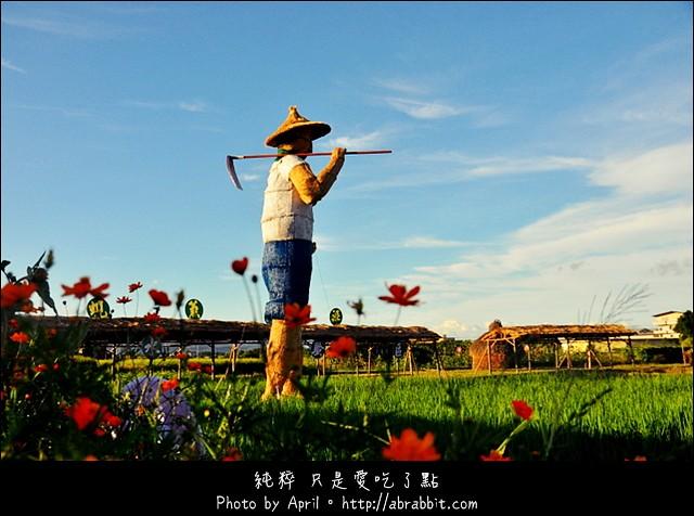 [宜蘭三星]三星有機米香節:黃金大稻田、稻草巨人、波斯菊田