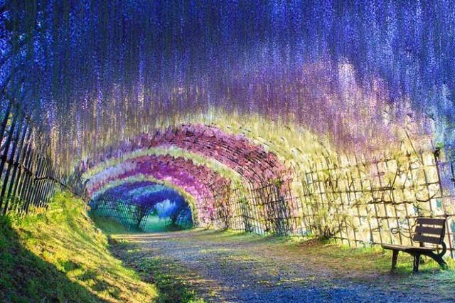 Kawachi-Fuji-Gardens-Tokyo-718x478