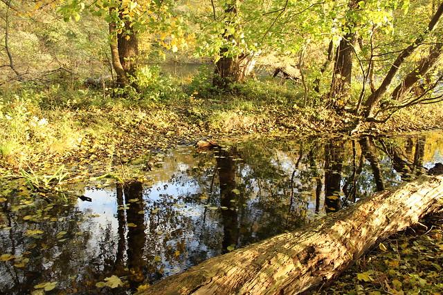 Herbst am Lehnitzsee