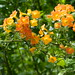Flower Plants of many kind ...Wilson.s Botanical Garden,,Melbourne by Manoo Mistry