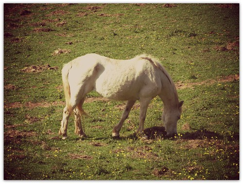 Horse in Springtime