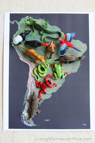 Rainforest Animals on Satellite Map of South America