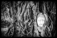 Protecting Buddha