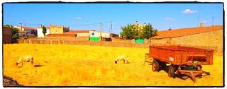 El campo de Villar del Buey, se desconecta muchísimo y relaja muchísimo