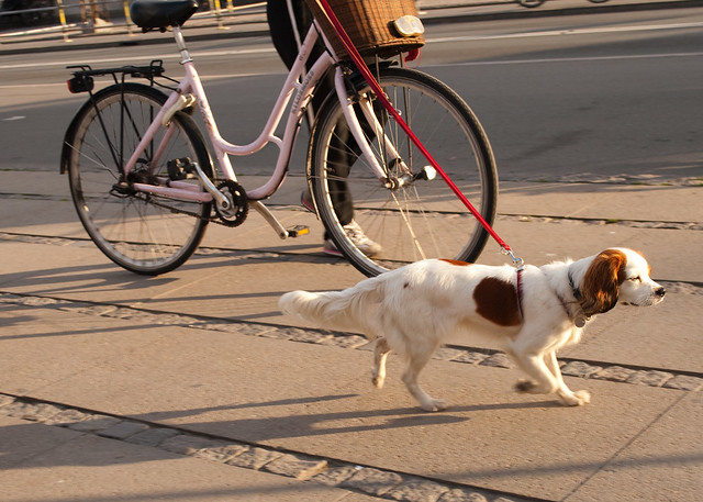 girldog2