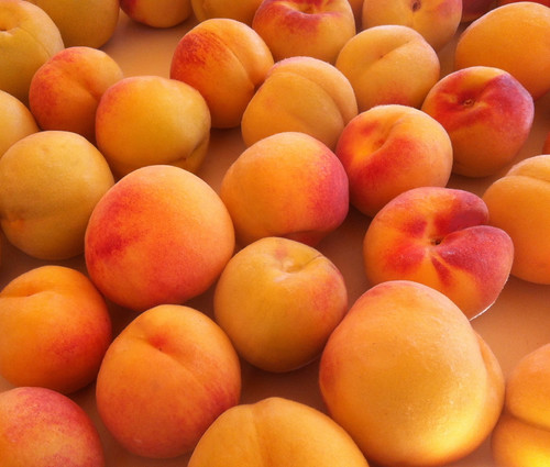 Eastern Peaches by randubnick