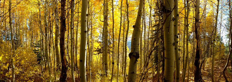 Hope Valley Aspen Grove