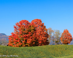 Three Red Trees