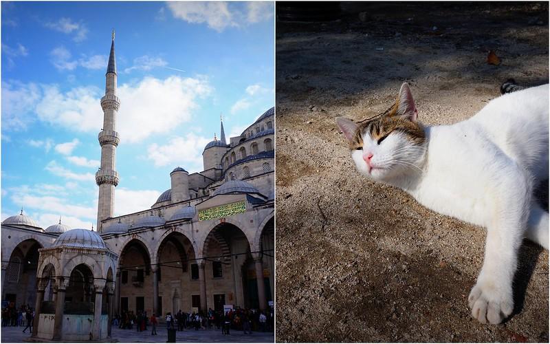 Stray-Cats-Istanbul-(2)