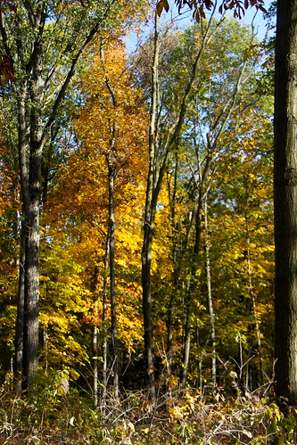 autumn trees color fall woods jaycountyindiana