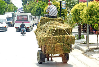 Albania-02675 - Does Anyone know where my Cows are?????
