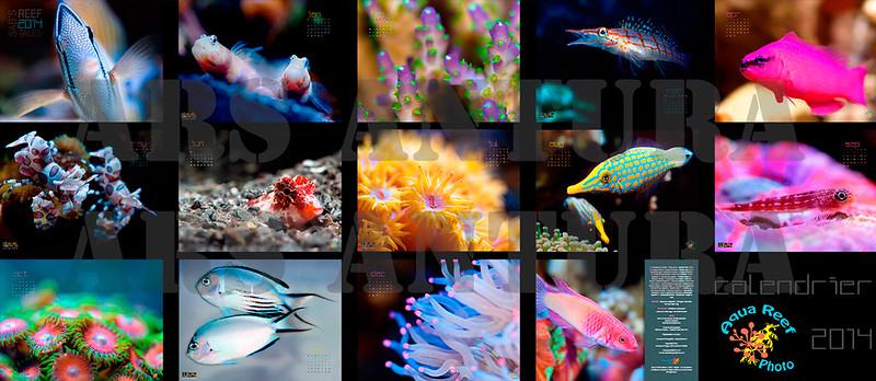 Le calendrier 2014 des contes du r cif est arriv forum for Vpc aquariophilie