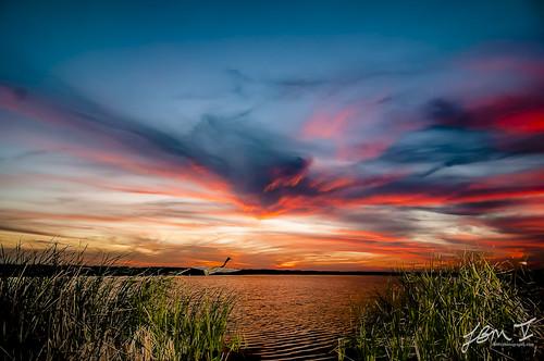 sunset bird heron texas flight avian gulfcoast colorfulsunset portaransastx texassunset tpwd birdsoftexas leonabelleturnbullbirdingcenter betteroutside