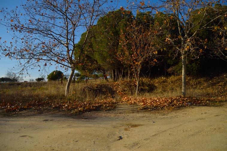 lara-vazquez-paisaje-landscape-madlula-winter