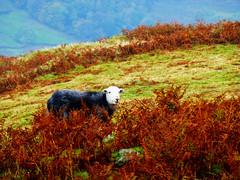 The Lakes - Cumbria