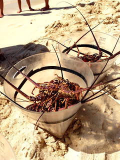 lobsters @ pinel island