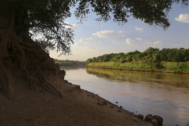 Omo River, tree with exposed roots (left)