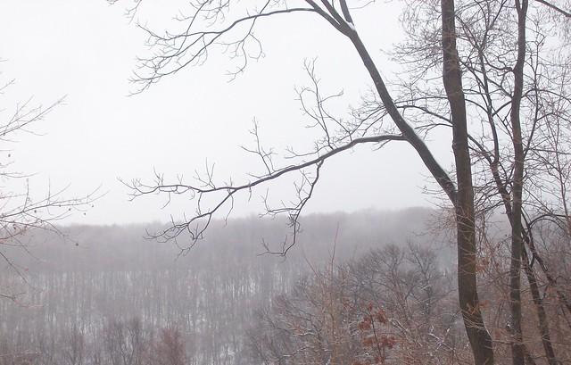 icy trees 3