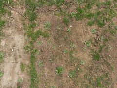 Dirt_greengrasspatches-sticks-plants_wide.jpg