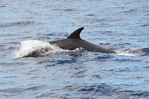 Dolphins, Los Gigantes