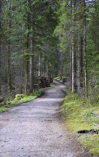 geotagged schweiz switzerland nikon suisse camino hiking path natur che wandern wanderweg môtiers cantondeneuchâtel pouettaraisse nikonschweiz d5300 capturenx2 ponte1112 môtiersne nikkor18200vrll viewnx2 geo:lat=4690193089 geo:lon=661559979