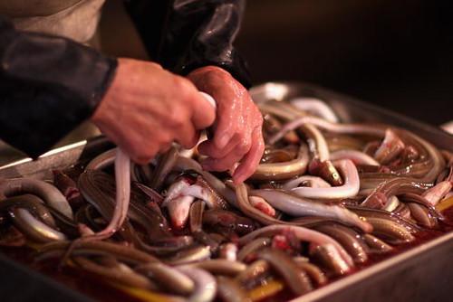 日本鰻魚,日本傳統美食也是日本最貴的食用魚,現在也進入IUCN紅名單。(圖:Chris Jackson)