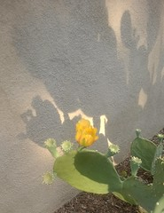 cactus blossom with shadow