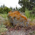 A rock near Mammoth