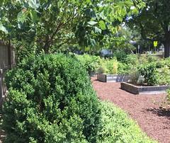 Poolesville Comm Garden2