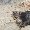 Gatito playero #kittie #cat #beach