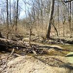 Stoneybrook Stream Restoration