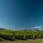 Marlborough Vineyards  - New Zealand