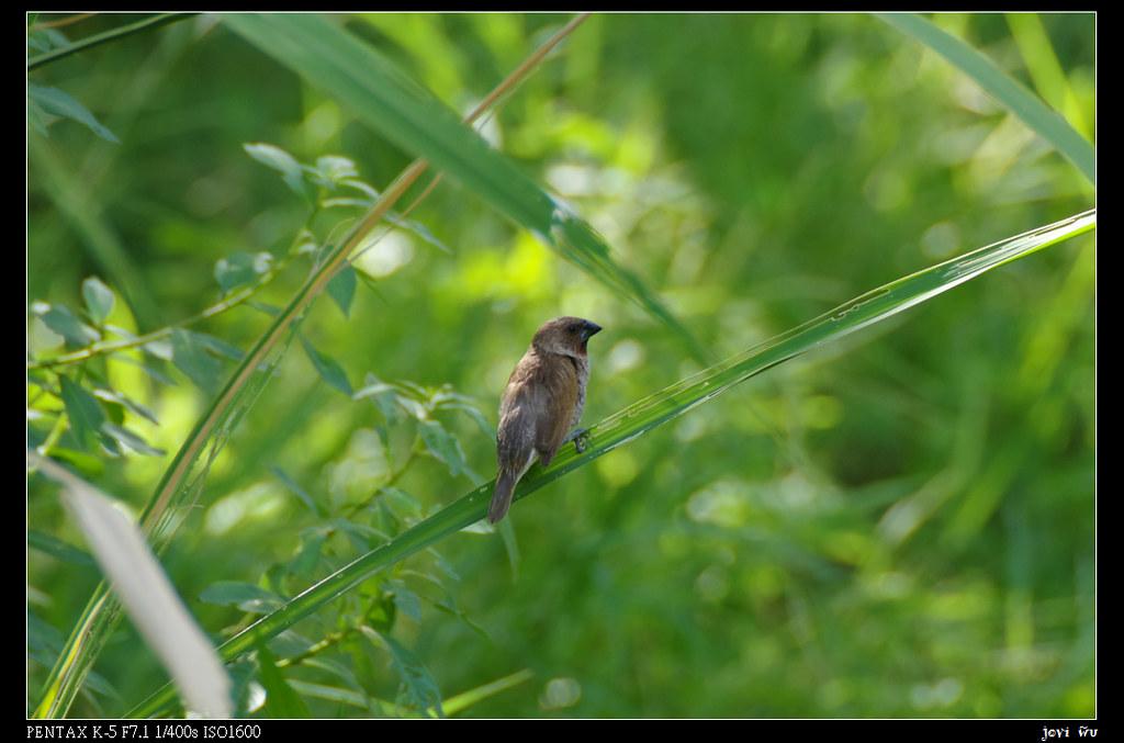 鳥松濕地打鳥去