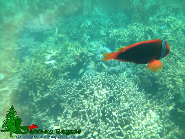 honda-bay-pandan-island-7