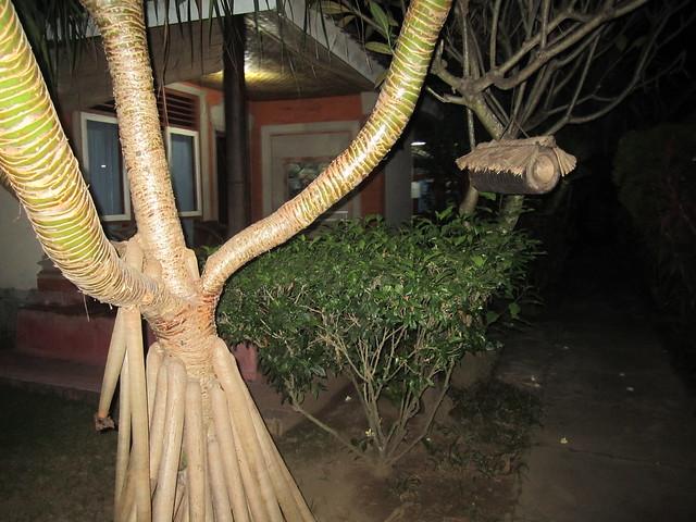 Территория отеля ухожена и усажена разнообразными деревьями