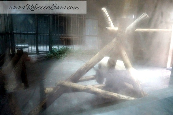 Chengdu - Panda Breeding Farm-052