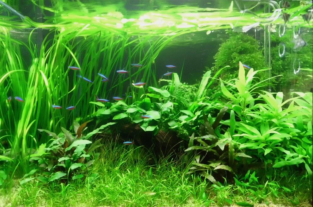 Diametrical scapes AquaScaping World Forum