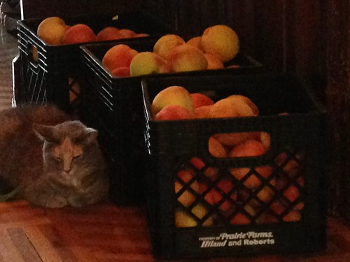 guarding the peaches