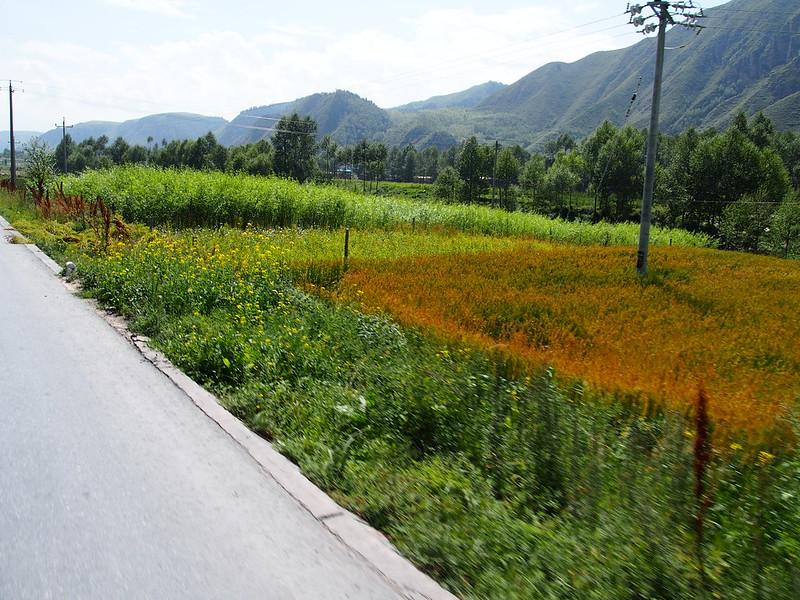 QH06 Zhangye Xining P8250397