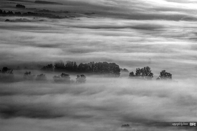 black_fog
