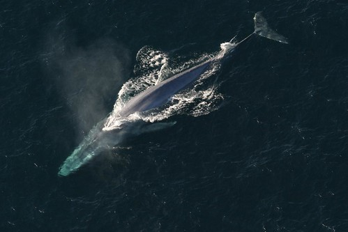 Buried in every whale's earwax resides a record of their lifetime exposure to pollutants