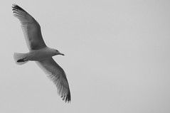Gull 0813 8430