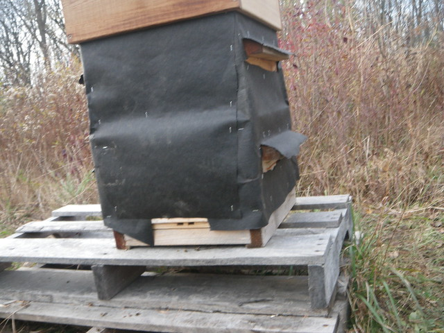 hive wrapped for winter