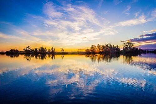 australia newsouthwales backforest
