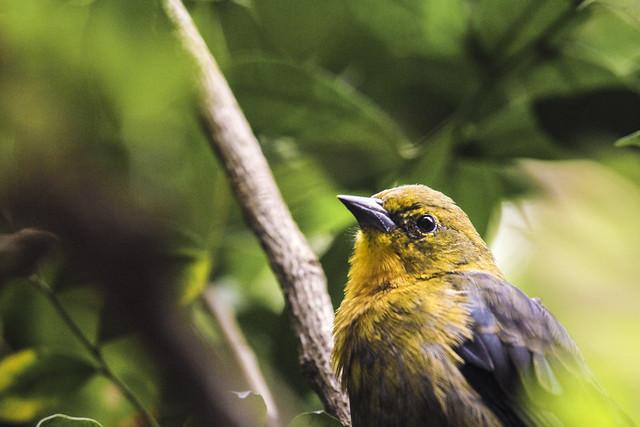 Jurong Bird Park-60