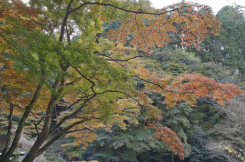 【写真】2013 紅葉 : 日向大神宮/2020-10-05/IMGP3370