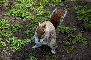 Bon appétit petit écureuil !