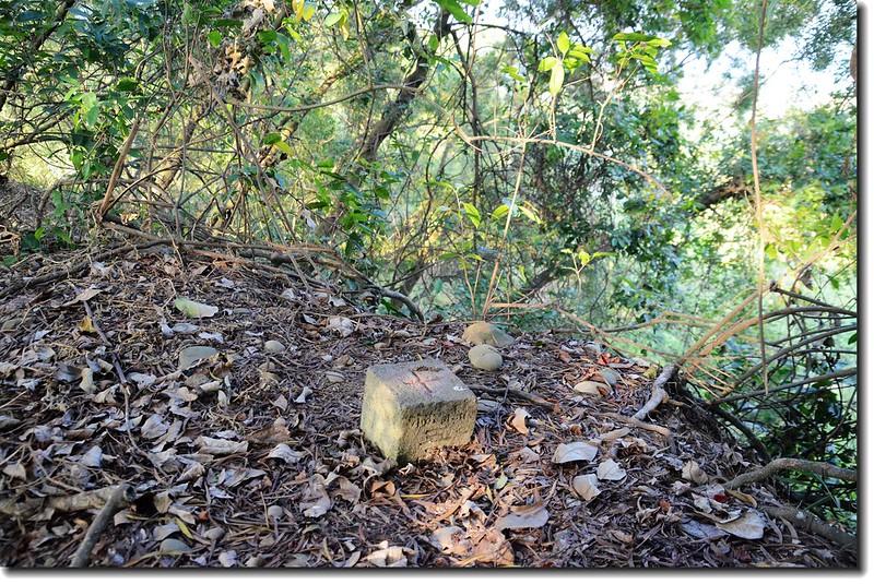 雲林林內南觸口山森林三等三角點(Elev. 328 m) 2