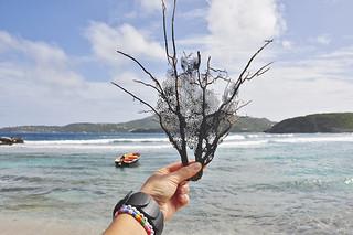 bart_korall