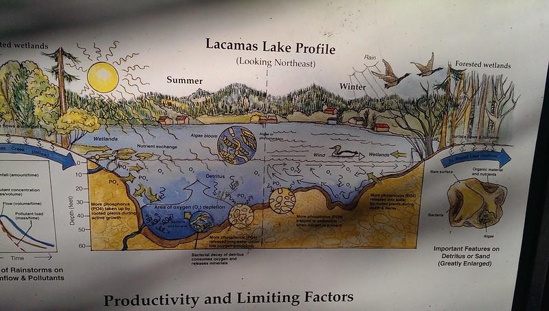 Lacamas Ecosystem